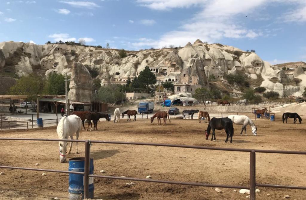 Hestetur i kappadokien børnevenlige oplevelser i kappadokien 1024x672 - Børnevenlige oplevelser i Kappadokien